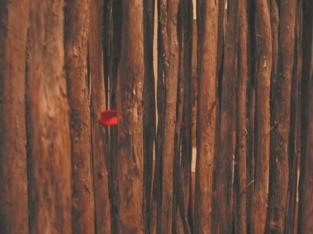 2001 chase.stix.redfabric copy 1