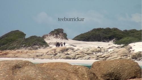 2012 OBSERVANCE filmstill_teeburickar